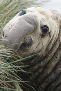F057_LJ4H9895_zeeolifant